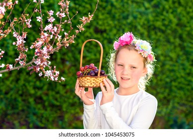 Little girl with basket of the first grape fruits during the Jewish holiday, Shavuot in Israel.