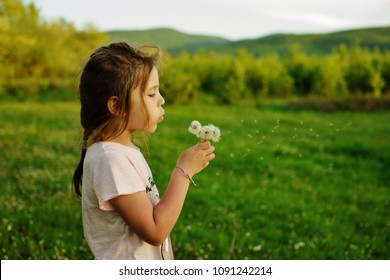 little girl blowing on the dandelions on the spring meadow