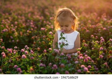 A little girl with a bouquet of flowers in a clover field is bitten by mosquitoes. A child in the rays at sunset. Insect bites.