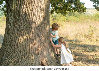Little girl and boy climbing a tree. Cute kids on the big old tree on sunny day. Child climbing a tree