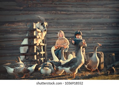 Little girl and boy are feeding geese and goat in the country, Russia. Image with selective focus and toning.