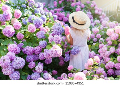 Little girl is in bushes of hydrangea flowers in sunset garden. Flowers are pink, blue, lilac, lavender and blooming in town streets. Kid is in pink dress, straw hat. Concept of childhood, tenderness.