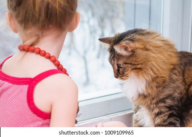 Little girl and cat sit and look out the window