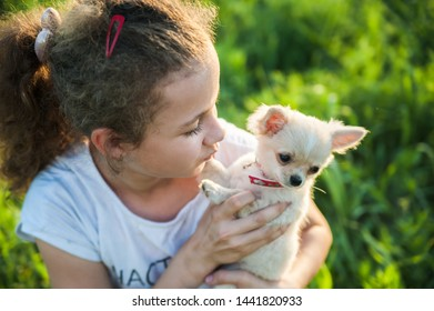 Little girl with a chihuahua puppy. A puppy in the hands of a girl
