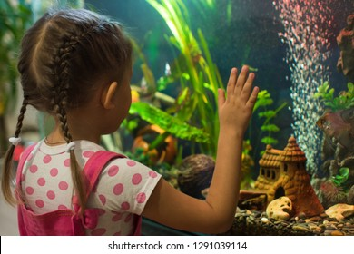 Little girl child looks at the fish in the aquarium
