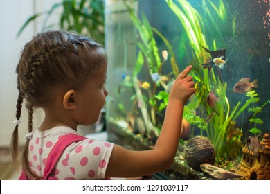 Little girl child looks at the fish angelfish in the aquarium