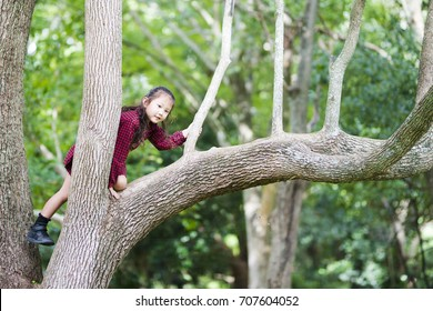 Little girl climbing a tree