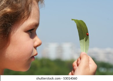 Little girl considers a leaf on which the ladybird sits