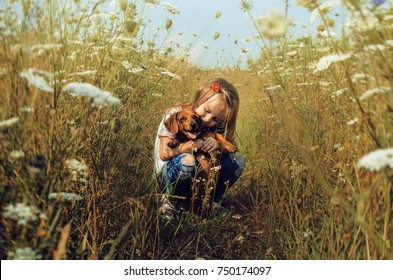The little girl with  dachshund in the field in a sunny summer day