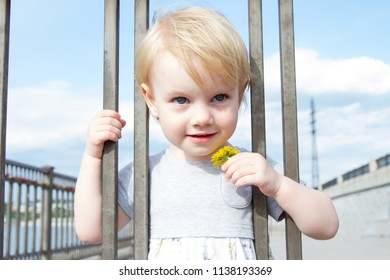 little girl with a dandelion flower looks through the fence of the fence
