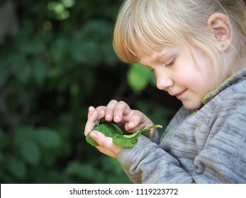 A little girl examines the insect caterpillar.