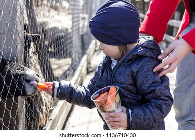 Little girl feeding animals at the contact zoo.