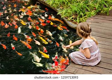 little girl feeding colorful fish in a zoo. Thailand. Phuket Botanic Garden.