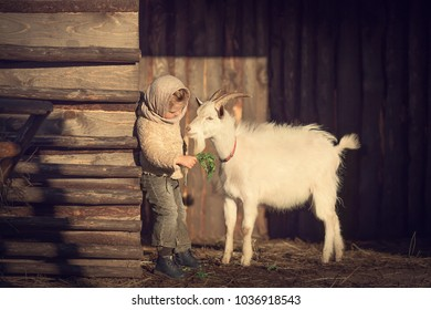 Little girl is feeding a goat in the country, Russia. Image with selective focus and toning.