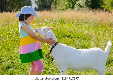 A little girl is feeding a goat on the lawn a sunny summer, in a country in Russia. Useful goat milk in the village in summer on vacation. lactose new milk