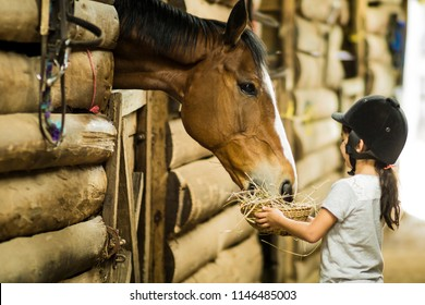 Little girl feeding a horse in a stable