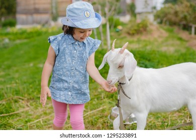A little girl is feeding a white goat on the lawn a sunny summer, in a country in Russia. Useful goat milk village in summer on vacation. lactose . wooden Small house in village.