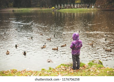 Little girl feeds waterfowls on a small lake coast in autumn park