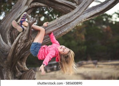 Little girl hanging upside down from the branch of a tree