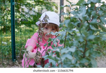 Little girl is hiding behind the bushes branches in summer with sly look eyes