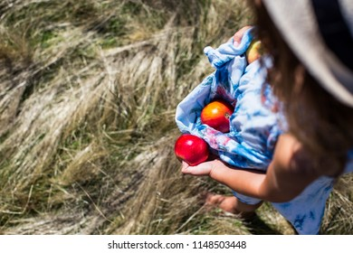 Little girl holding apples in her dress and hand