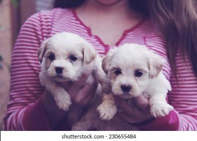 little girl holding maltese puppies