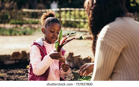 Little girl holding a vegetable outdoors with her mother. Daughter holding young beetroot plant with mother in the farm. Little girl helping her mother in the garden.