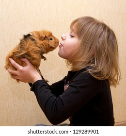 The little girl kissing the guinea pig. Love for animals concept.
