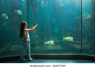 Little girl looking at fish tank at the aquarium