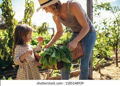 Little girl looking at fresh vegetables in tray of a her mother. Mother and daughter with freshly harvested vegetables in their garden.