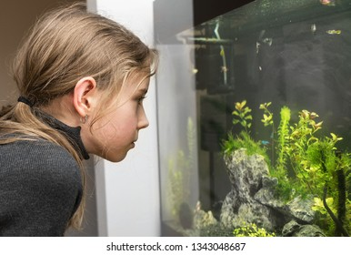 Little girl looks at the fish in the aquarium.