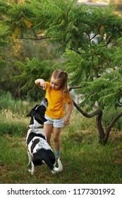 Little girl and mongrel dog outdoors. Child gives treat to her pet. Children and animals.