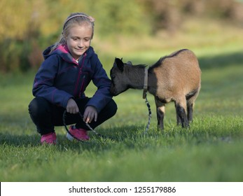 Little girl Outdoor in nature play with a White Goat