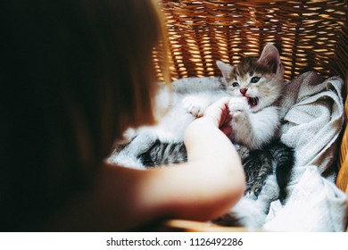 Little girl paying with the kittens