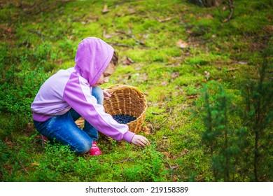 Little girl pick blueberries in summer dense forest.