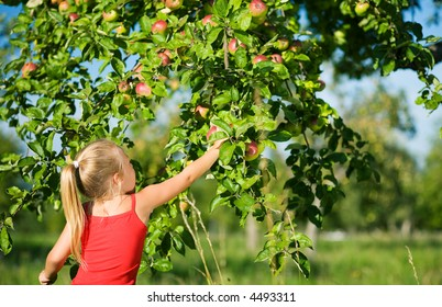 A little girl picking an apple from a tree, the weather is sunny