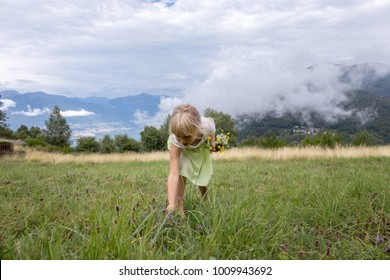 little girl picking wild flowers