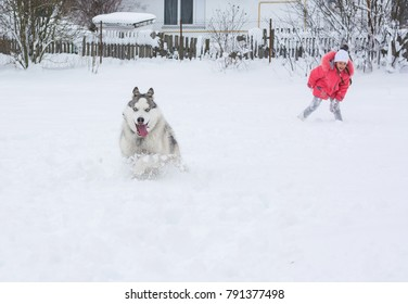 471e45a59d5 A little girl in a pink jacket and hat girl runs with a Husky dog in