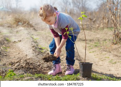 Little girl planting almond tree in a garden
