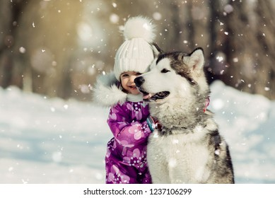 little girl is played with Malamute in winter in the park. Lovely girl with beautiful big dog in the forest in winter time