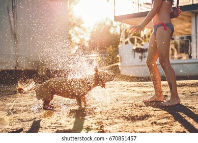 Little girl playing with a dog shaking off water on the beach