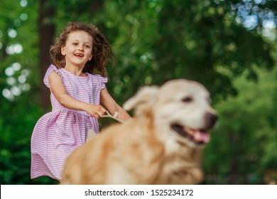 Little girl playing with a golden retriever, outdoor summer