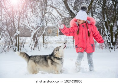 0c32aa63c96 Little girl playing with a Siberian husky breed dog in the winter in the  snow