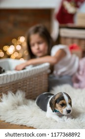 Little girl with puppies during Christmas eve