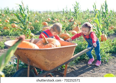 Little girl pushing wheelbarrow with pumpkins at farm field patch