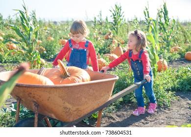 Little girl pushing wheelbarrow with pumpkins at farm field patch