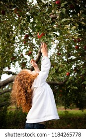Little Girl Reaching for Apples in Orchard
