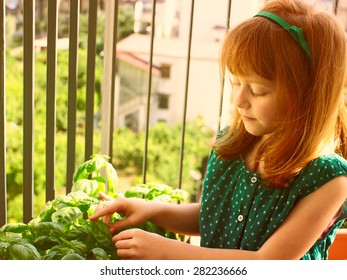 Little girl with red hair touching with care leaves of fresh  basil growing in a pot