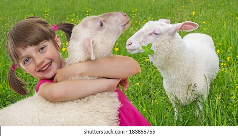 little girl and sheep on a meadow