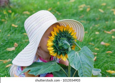 little girl smelling a large sunflower in the garden at home
